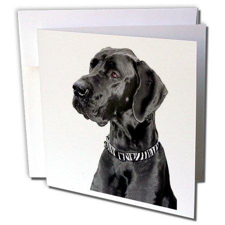 3dRosa 20,3 x 20,3 x 0,6 0,6 0,6 cm schwarz deutsche Dogge Grußkarten, Set 12 (GC _ 1054 _ 2) B000VG70QK | Schön  8a5b7b
