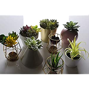Convenient Creations Artificial Succulent Plants 14 pcs Faux Succulents, Fake Plants for Decoration, Shelf Decor, Wreath or Terrarium - Realistic Fake Succulents, Mini Air and Aloe Plant and More 3