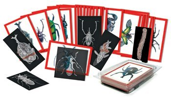 Roylco, Inc. Insect X-Ray and Picture Cards by Roylco
