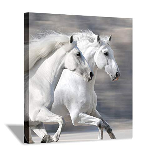 Arabian Horse Paintings - Hardy Gallery White Horse Picture Wall Art: Running Animal Artwork Painting Print on Wrapped Canvas for Living Room or Office (24'' x 24'')