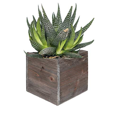 (CYS EXCEL Rustic Cube Planter Box, Wood Planter, Decorative Craft Box, Succulent and Floral Arrangements, Wood Box with Removable Liner H:4