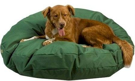 Snoozer Waterproof Rectangle Pet Bed, Small, Green, 28 by 44-Inch