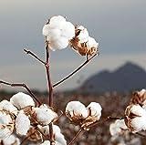 Organyc 100% Organic Cotton Rounds