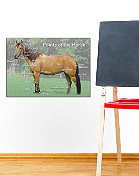 Poster Points of the Horse Mini 60 x 40cm