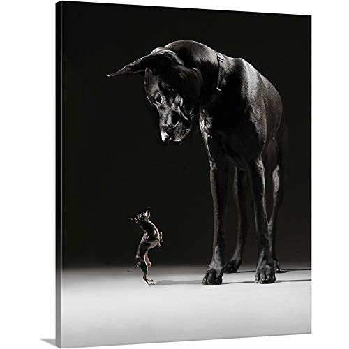 A Chihuahua Standing on its hind Legs Facing The Great Dane Canvas Wall Art Print, 20 x24 x1.25