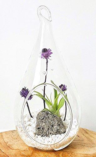"Air Plant Terrarium Kit, 7.5"" & 4.5"" Hanging Glass Teardr..."
