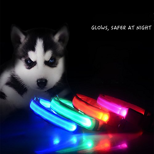 Glumes LED Pet Collar, Light Up LED Nylon Adjustable Dog Collar with 3 Light Settings and Strong Buckle Keep Pet Safe and Visible for Dogs& Cats