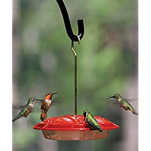Several hummers feeding at a Hummingbird Feeder
