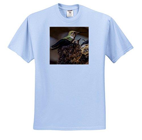 Price comparison product image 3dRose Danita Delimont - Humminbirds - USA, Arizona, Tucson, Hummingbird Keeping Her nestlings Warm. - T-Shirts - Youth Light-Blue-T-Shirt Small(6-8) (TS_278473_60)