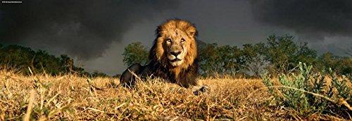 KV&H Lion Puzzle