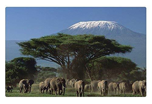 - Tollyee Indoor Floor Rug/Mat - Amboseli National Park, Kenya Africa (23.6