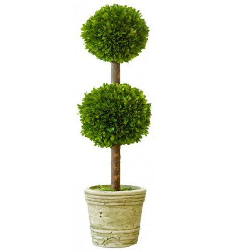 Mills Floral Preserved Boxwood Double Ball Topiary 30