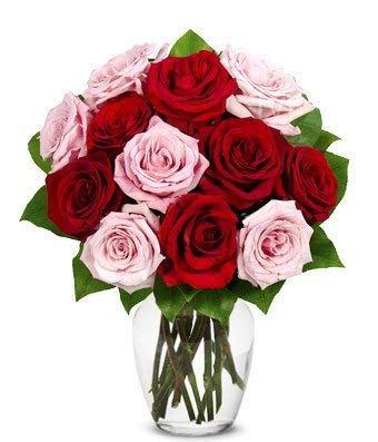 Flowers - One Dozen Red and Pink Roses (Free Vase Included)