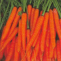 Seeds and Things 300+ Mini Sweet Carrot Seeds-japanese Name Ninjin Carrot-- Sweet and Tender 4 Carrots. Planting Season: Spring or Fall by Seeds and Things