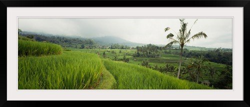 GreatBIGCanvas ''Rice Paddies Bali Indonesia'' Entitled Photographic Print with Black Frame, 48'' X 16'' by greatBIGcanvas