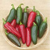 David's Garden Seeds Pepper Jalapeno M 6538 (Red) 50 Non-GMO, Heirloom Seeds