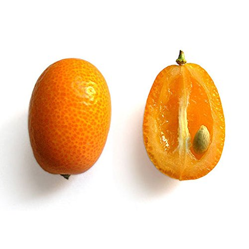 Oval Nagami Kumquat Fortunella Margarita Citrus Cumquat Rutaceae Seeds 5 PCS