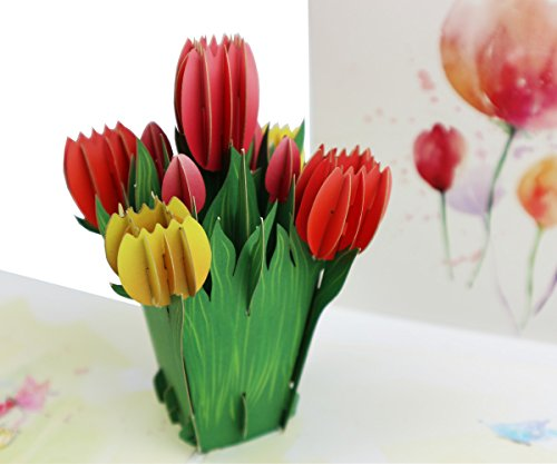 Fusolo 3D Pop Up Cards, Tulip Cards, Birthday Cards, Thank you Cards, Greeting Cards,