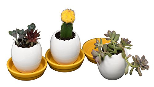- Ceramic Planters for House Plants-Plant Pots Set for Indoor & Outdoor Use (Eggs) by Arad