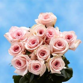 GlobalRose 1 Dozen Pink Roses - Beautiful Long Stem Flowers