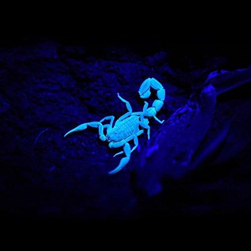 TATTU U3 Linterna UV 395nm Luz Ultravioleta recargable 10W L/ámpara negra LED con Cable de Carga micro USB