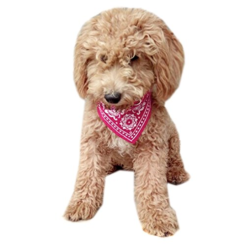 [Alfie Pet by Petoga Couture - Jam Bandana for Dogs & Cats - Color: Pink, Size: Large] (Halloween Costume Wearing Overalls)