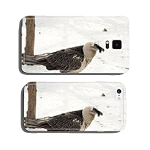 portrait of a bearded bird cell phone cover case iPhone6 Plus