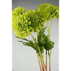 6 Green Pompom Mums - Excellent Home Decor - Indoor & Outdoor 30