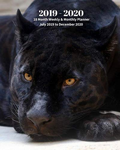 2019 - 2020 | 18 Month Weekly & Monthly Planner July 2019 to December 2020: Black Panther Wildlife Animal Vol 16 Monthly Calendar with U.S./UK/ ... Holidays- Calendar in Review/Notes 8 x 10 in. ()