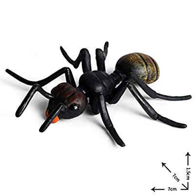 BESPORTBLE 5pcs Ant Life Cycle Stages Classroom Teaching Accessories Educational Toys for Kids Student Teacher Black: Home & Kitchen