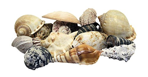us-shell-large-world-mixed-shells-1-kilo-weight