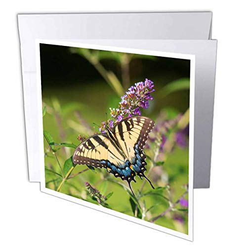 3dRose Danita Delimont - Butterflies - Eastern Tiger Swallowtail on Butterfly Bush, Illinois - 6 Greeting Cards with envelopes (gc_314820_1)
