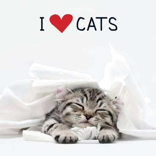 I Love Cats pdf