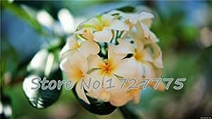 flor de huevo libre del envío 30 pedazos un paquete paquete original