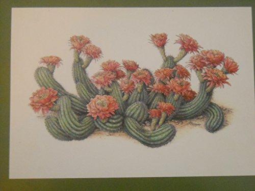 International Juried Exhibition of The American Society of Botanical Arts; Diane Bouchier ASBA Founders Award for Excellence in Botanical Art Desert Botanical Garden, Phoenix