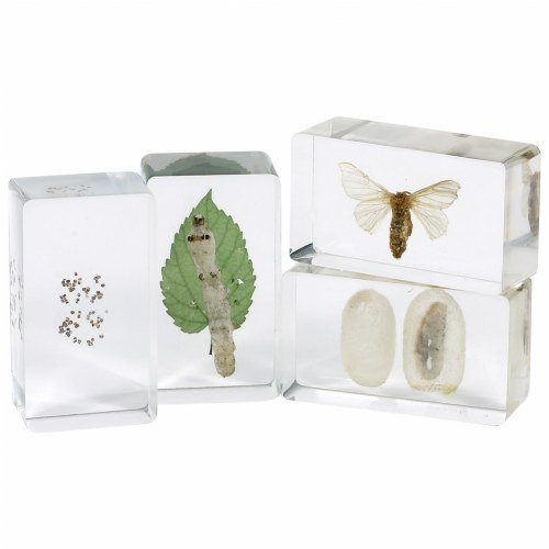 Kaplan Life Cycles Moth Specimen Set (Set of 4)