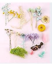 Freenfitmall Torkade blommor, riktiga torkade blommor blandning naturliga blommor växter pressade för harts smycken tillverkning hantverk gör-det-själv gör-det-själv gör-det-själv ljustillverkning tvål tillbehör