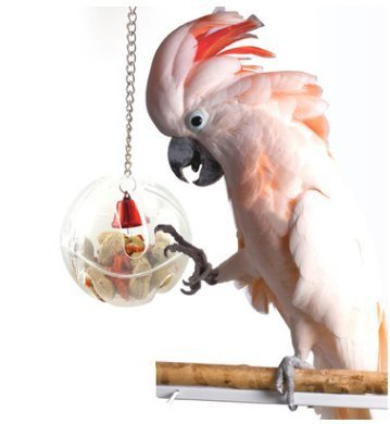 Parred Foraging Systems Foraging WheelHapaus for Parred Macaw African Greys Budgies Parakeet Cockatiel Conure Cage Toy