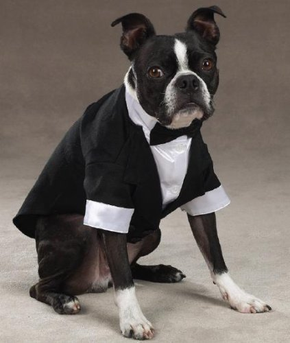 East Side Collection Yappily Ever After Groom's Tuxedo for Dogs, 16'' Medium