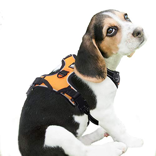 Bestselling Dog Harnesses