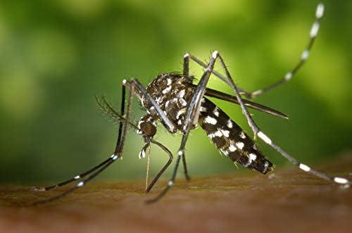 5er set anti mosquitos antorchas antimückenfackeln protección contra insectos mosquitos