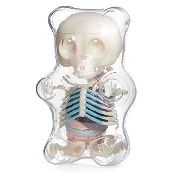 The Visible Gummy Bear Skeleton Amazon Electronics