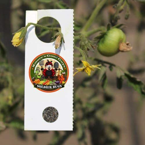Nature's Good Guys 500 Encarsia Formosa Eggs for Whitefly Control