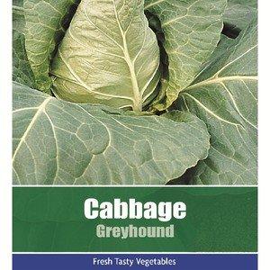 De Ree Cabbage Greyhound Vegetable Plant 40 Seeds