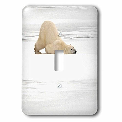 3D Rose lsp_208141_1 Canada, Manitoba, Churchill. Polar Bear Scratching Itself. -Single Toggle Switch