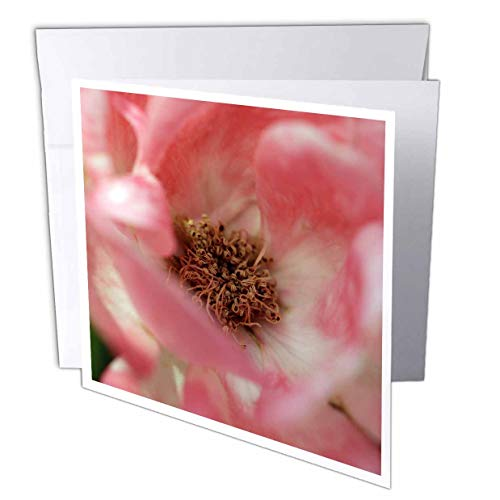 (3dRose Stamp City - Flowers - Macro Photograph of The Pink Petals and Curly Stamens of a Rose. - 1 Greeting Card with Envelope (gc_315576_5))