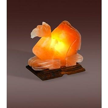 Amazon.com: Evolution Himalayan Crystal Salt Lamp, Camel Shape (4 ...