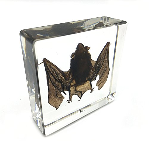 Amazingbug Real Bat Specimens Science Classroom Specimen for Science Education