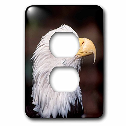 3dRose Danita Delimont - Birds of prey - Bald eagle, Haliaeetus leucocephalus, adult, western, Washington, USA - Light Switch Covers - 2 plug outlet cover (lsp_260480_6) (Majestic Birds Plate)