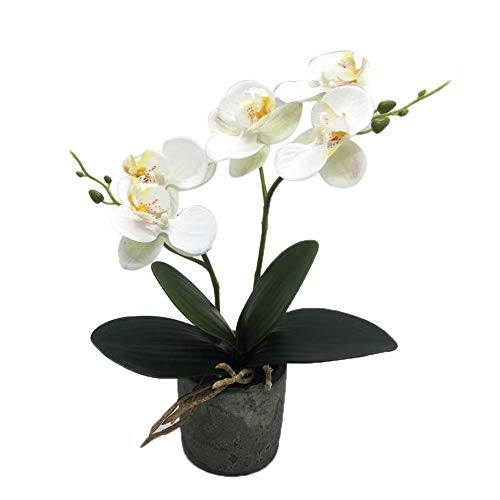 KINBEDY Aritifical Bonsai Silk Orchids Phalaenopsis with Vase Home Office Decoration Party Wedding Decor,White.